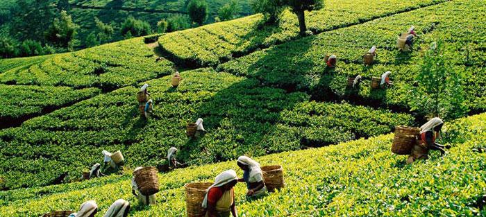 Tribal society brews organic plans in Kerala