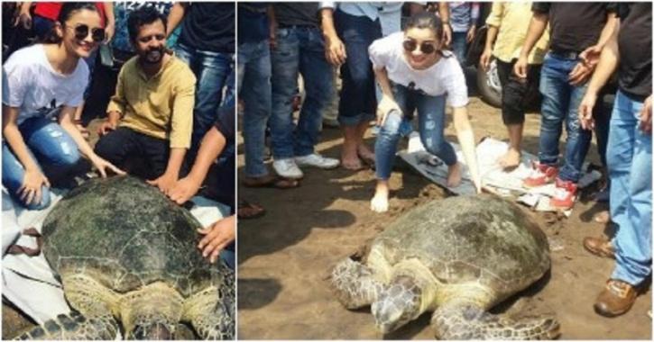 Alia Bhatt turtle