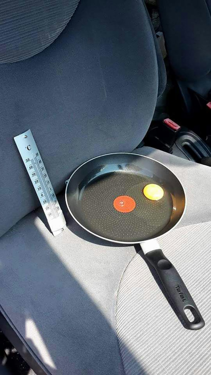 This is an egg in a pan left on the seat of a car. The window was a few centimetres open, so it can have fresh air