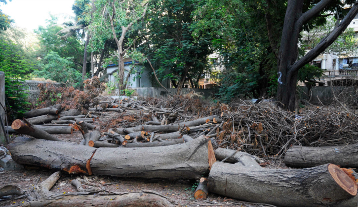 tree felling is now a real problem for the city of Mumbai