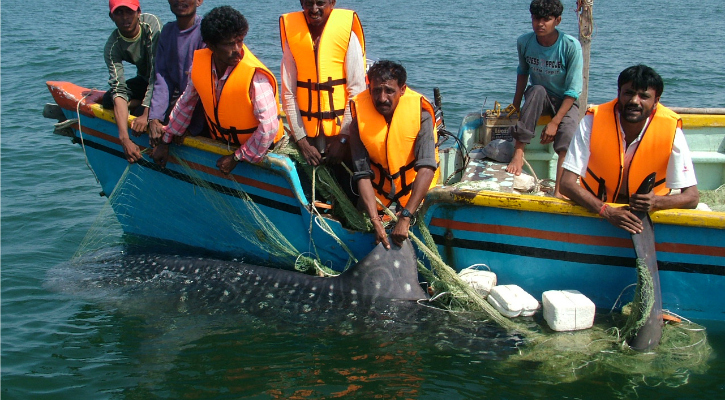 Rescuing a Whale Shark