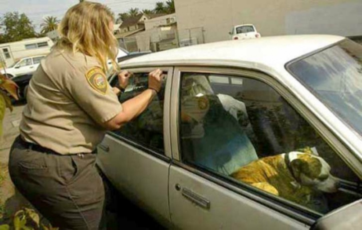 If you see a dog left alone in a hot car, take down the car's color, model, make, and license plate number. Have the owner paged in the nearest buildings, or call local humane authorities or police. Have someone keep an eye on the dog. Don't leave the scene until the situation has been resolved