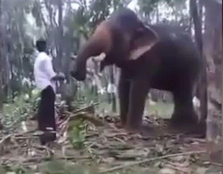 Baahubali Stunt Scene With An Elephant