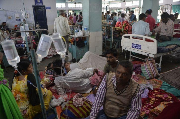 bengal dengue