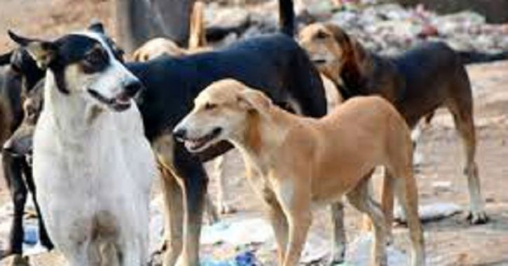 Stray Dog Drags Away Body Of Newborn In UP