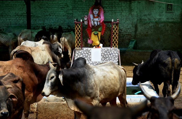 PG Hostels For Cows