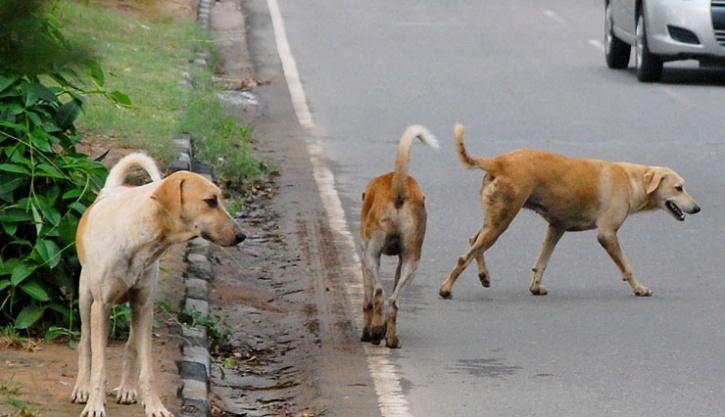 Pune street dogs