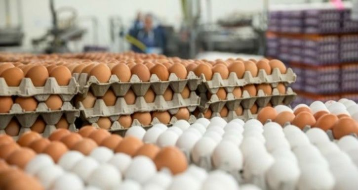 Myth #7: Buying eggs from local farmers is safer than purchasing them from the grocery store!   Fact: Eggs come from chickens, and chickens harbour Salmonella bacteria. So there is no guarantee that the farmers