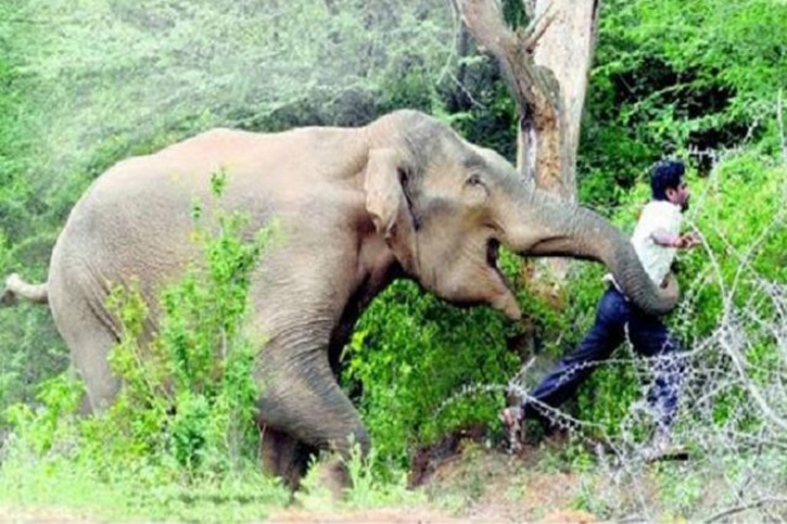 Man Trampled To Death By Elephant In Odisha While Taking Selfie