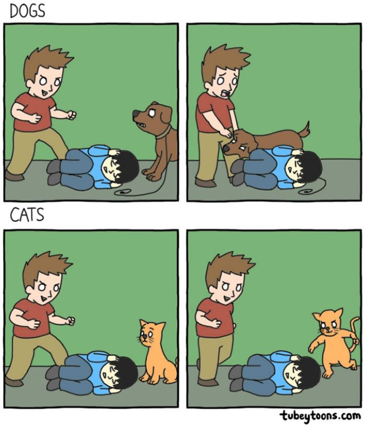 We're often asked if we're into cats or into dogs. While it is normal to love both species equally, there are some distinct personality traits that make them both liked and disliked by all sorts of humans.   Here are some hilariously brilliant illustrations that highlight the varied experiences owners often experience: