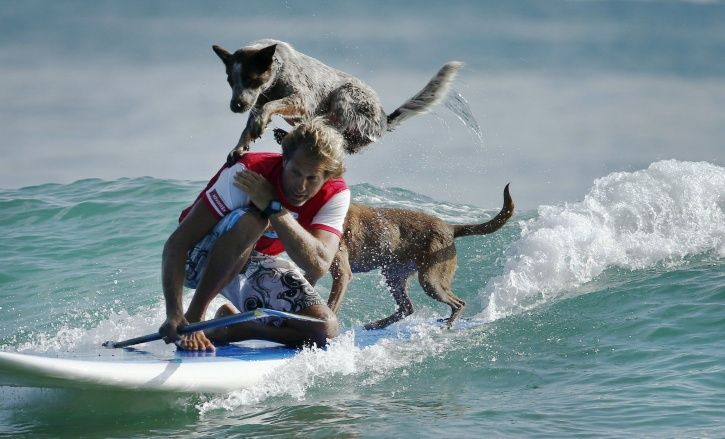 dog surfing instructors