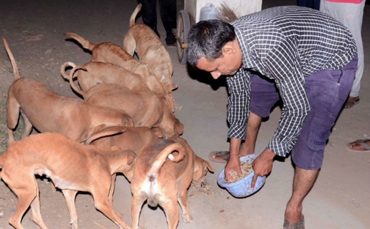 dogs of Panchot village