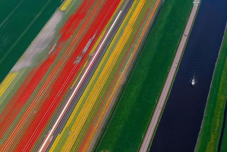 Fields of flowers 10