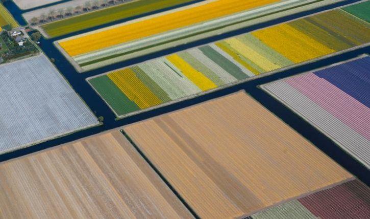 Fields of flowers 6