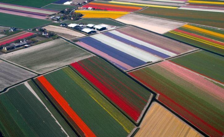 Fields of flowers 9