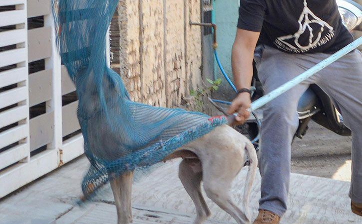 Mass Killing Of Stray Dogs Goes On Under Corporation Nose