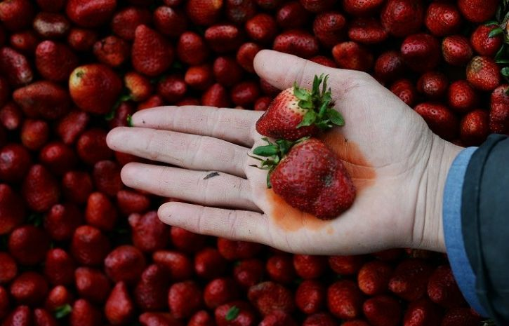 Strawberries Top The 'Dirty Dozen' List Of The Fruits And Vegetables With Most Pesticides