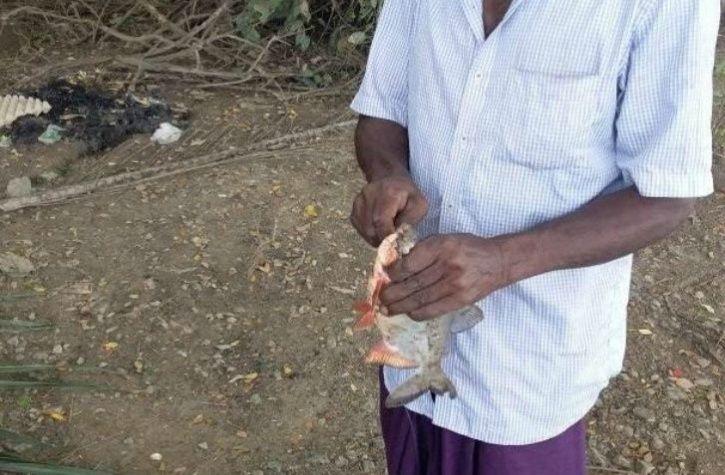 Arapaima Red Belly Piranha