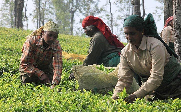 Arunachal Bursts Onto World Tea Map