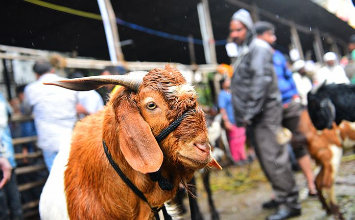Butcher Changes Name From Ashok To Ahmad During Eid