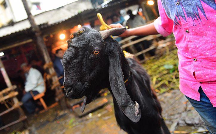 Dog In Goat Like Cloth