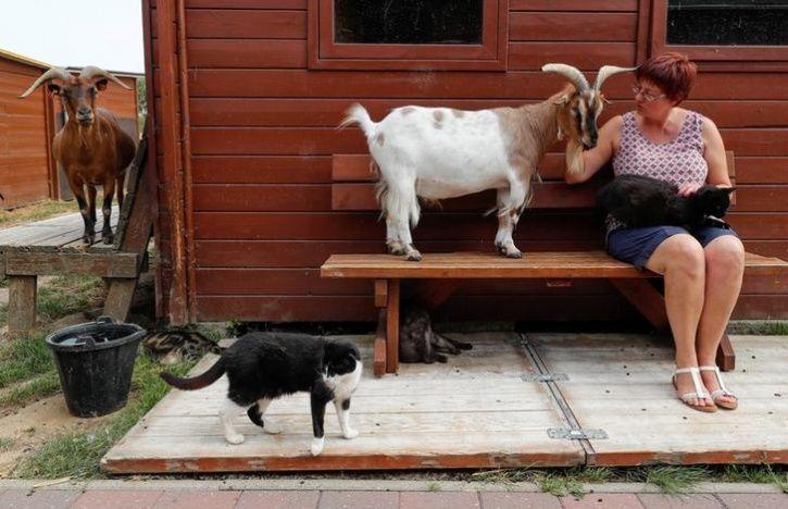 Elderly animal house6