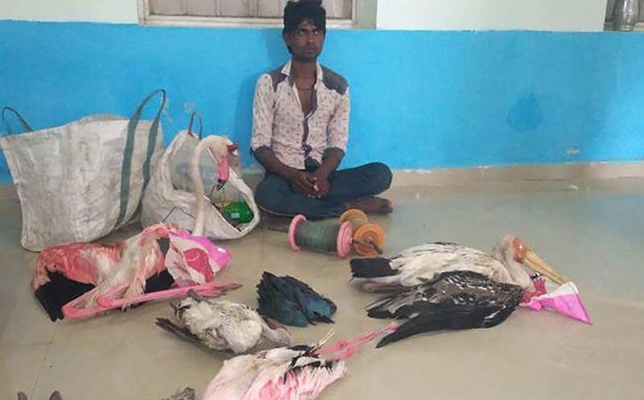 Gujarat Poachers Using Kites To Snag Nalsarovar Birds