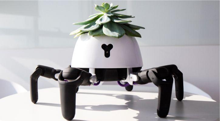 Hexa spiderbot