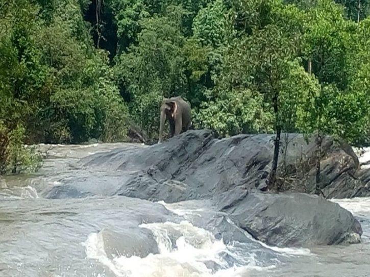 Kerala Flood Elephant