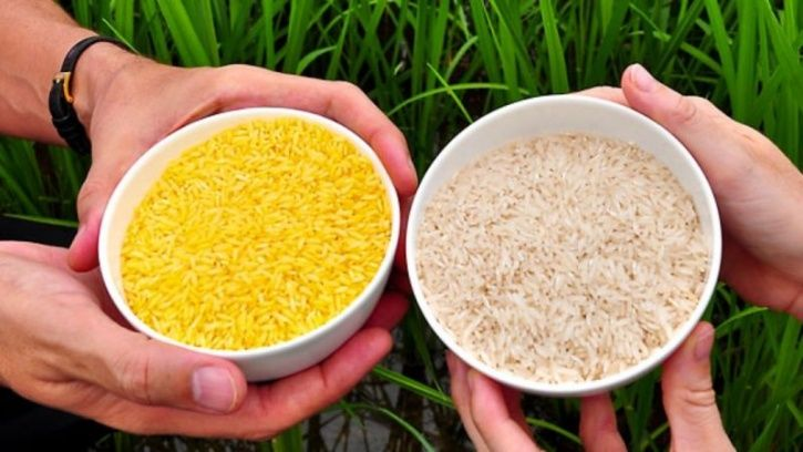 Scientists Have Found A Way To Use Genetically Modified Rice To Prevent HIV