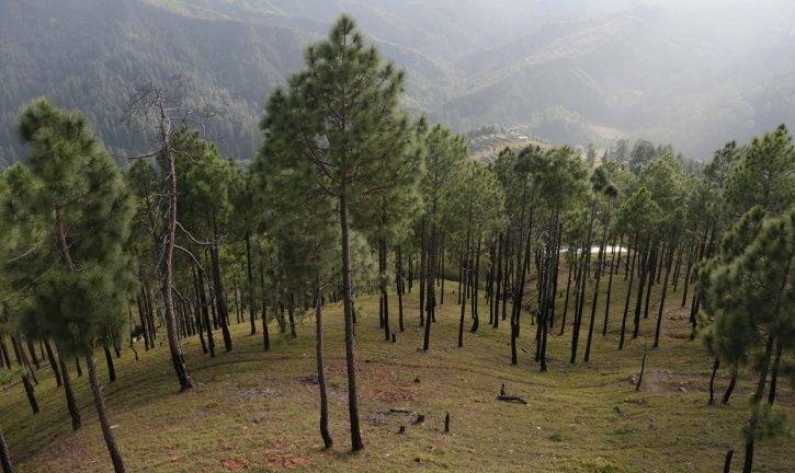 Uttarakhand Former Top Cop To Pay Rs 46 Lakh As Fine For Illegally Cutting 25 Trees