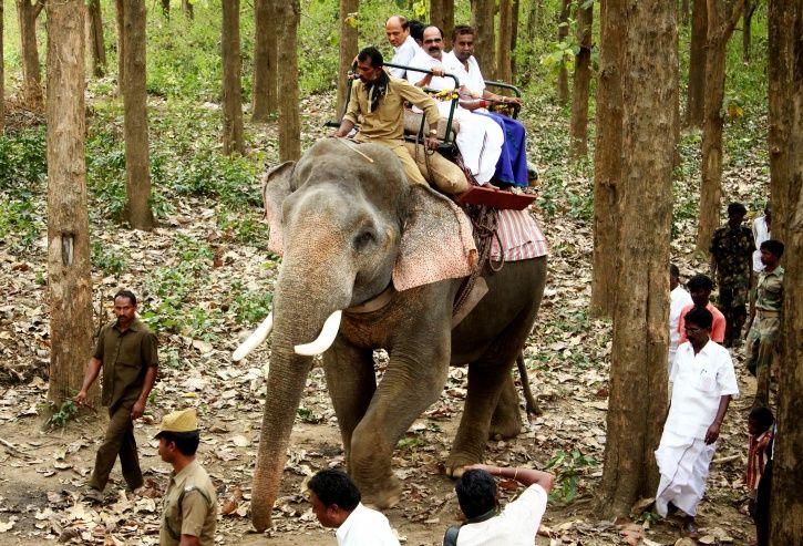Uttarakhand High Court, wildlife safari, tiger reserves, elephant rides banned, Wildlife Protection