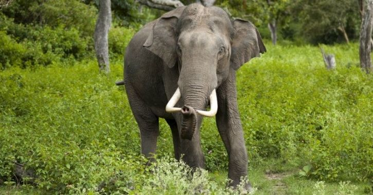 Wild Elephant Barges Into Indian Army Canteen In West Bengal Looking For Food