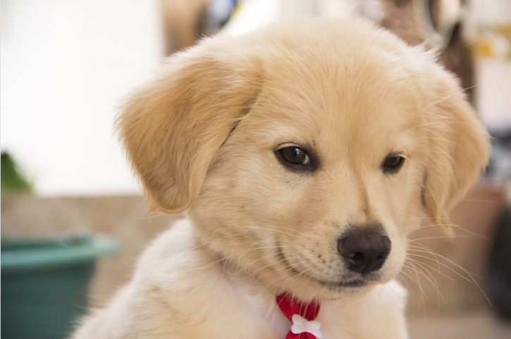 Can't Help But Feel Like Squeezing A Cute Puppy Or A Baby? Blame It On Your 'Cute Aggression'