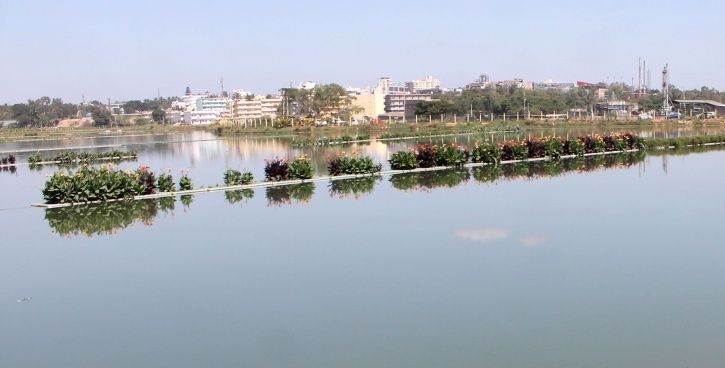 Hebbagodi lake, Bengaluru, limca book of records, biocon, vegetation, floating island