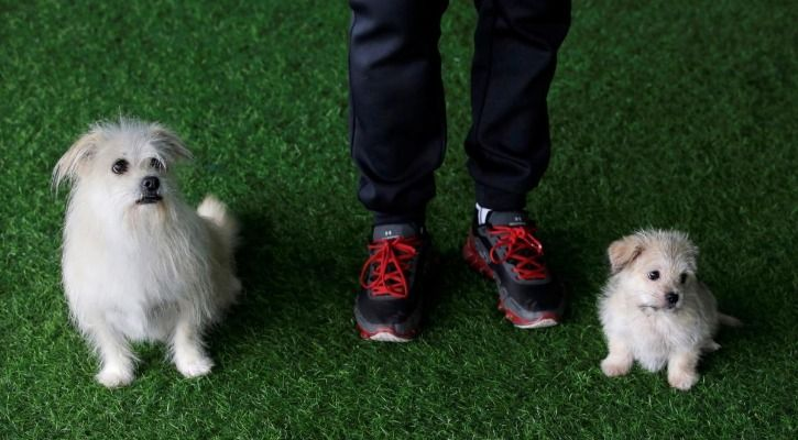 Juice cloned dog