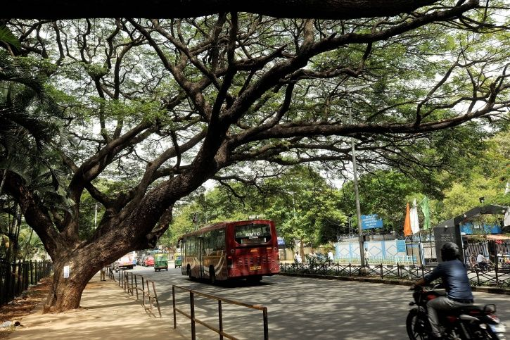 Bengaluru Is Making It Worse By Allowing By More Trees To Be Cut Down Easily