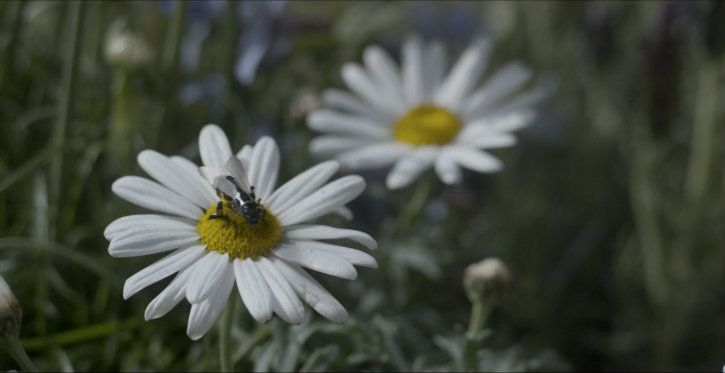 black mirror killer bee