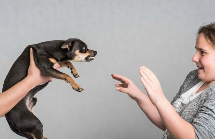 Did You Know Dogs Are More Likely To Bite Emotionally Unstable People?