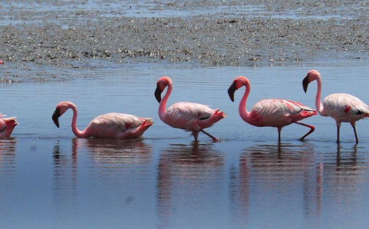 Enjoy Flamingo Safaris In Thane Creek