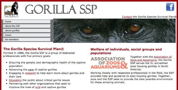 Gorilla Dating Website