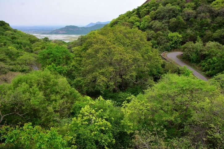 North East Lost Forest Area The Size Of Mumbai In Just Two Years
