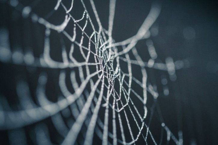 Spider Dream Meaning