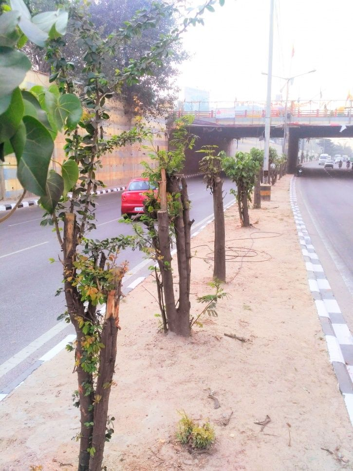 Chopped Down To Increase Visibility Of Hoardings