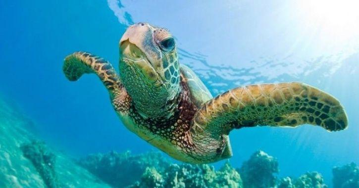 sea turtle female climate change