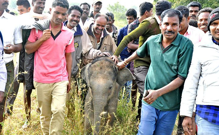 Selfie Mob Separates Elephant Calf From Mother