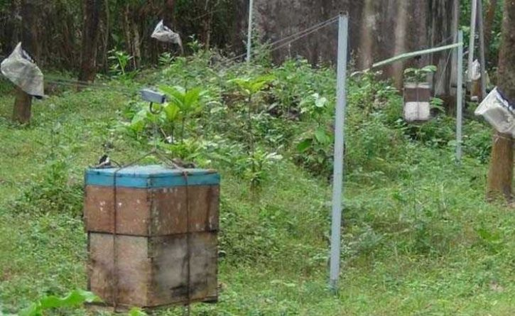 With Beehive Fence, Kerala