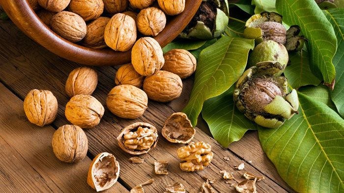 55 Grams Of Walnuts A Day Can Reduce The Risk Of Developing Type-2 Diabetes By Half