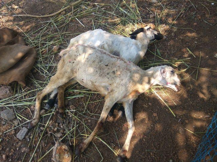 animal cruelty, welfare, high court of uttarakhand
