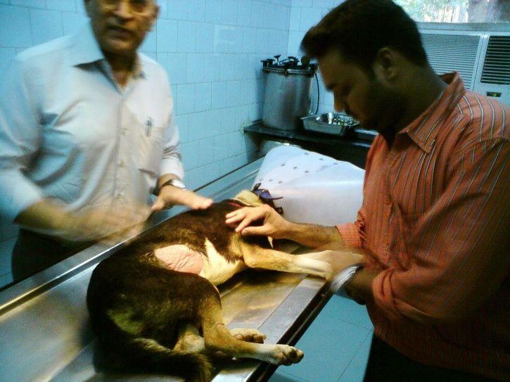 animal welfare, cruelty, high court, uttarakhand